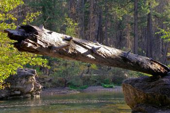 river-snag